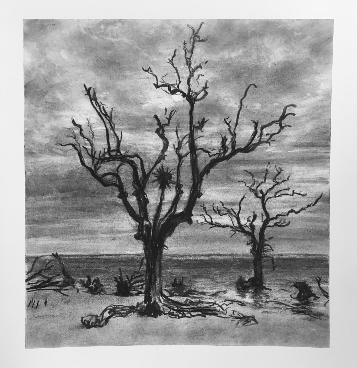 Hunting Island - Two Trees (Med)