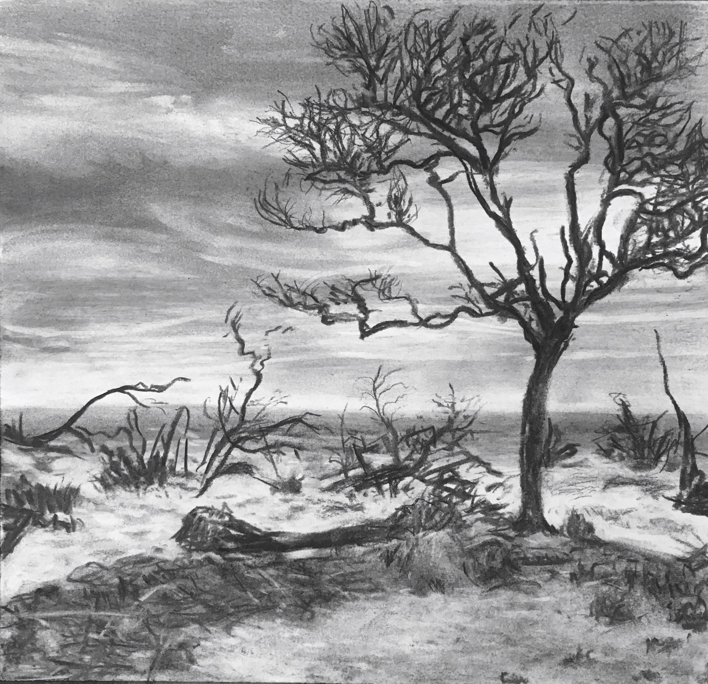 Hunting Island, SC: Debris – Allen Bannister
